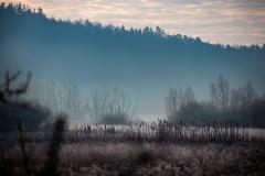Frosty Fog & Cat